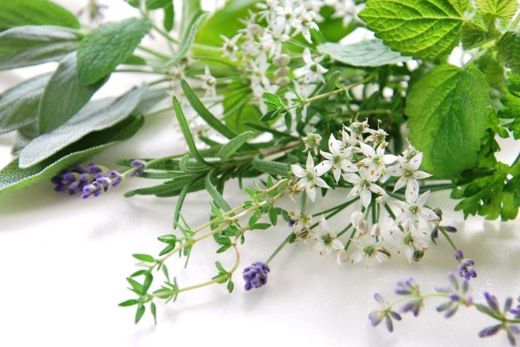 Eteričnim uljima protiv komaraca