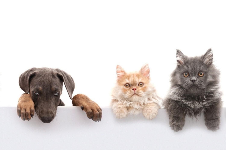 Zaštitite pse i mačke od vanjskih nametnika eteričnim uljima